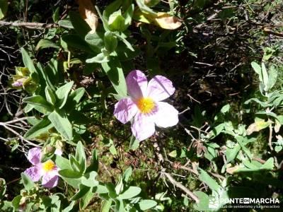 Piedra Escrita Diosa Diana; viajes noviembre; viajes puente mayo;turismo activo